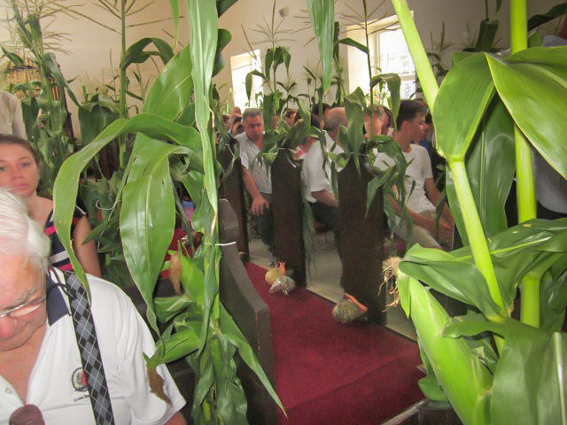 Corn stalks are tied to church pews, and local produce laid at the altar during the Thanksgiving service at All Saints Church.