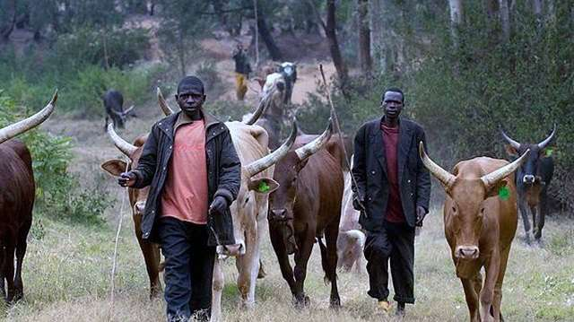 Fulani herdsmen have evolved into Fulani jihadists in Nigeria.