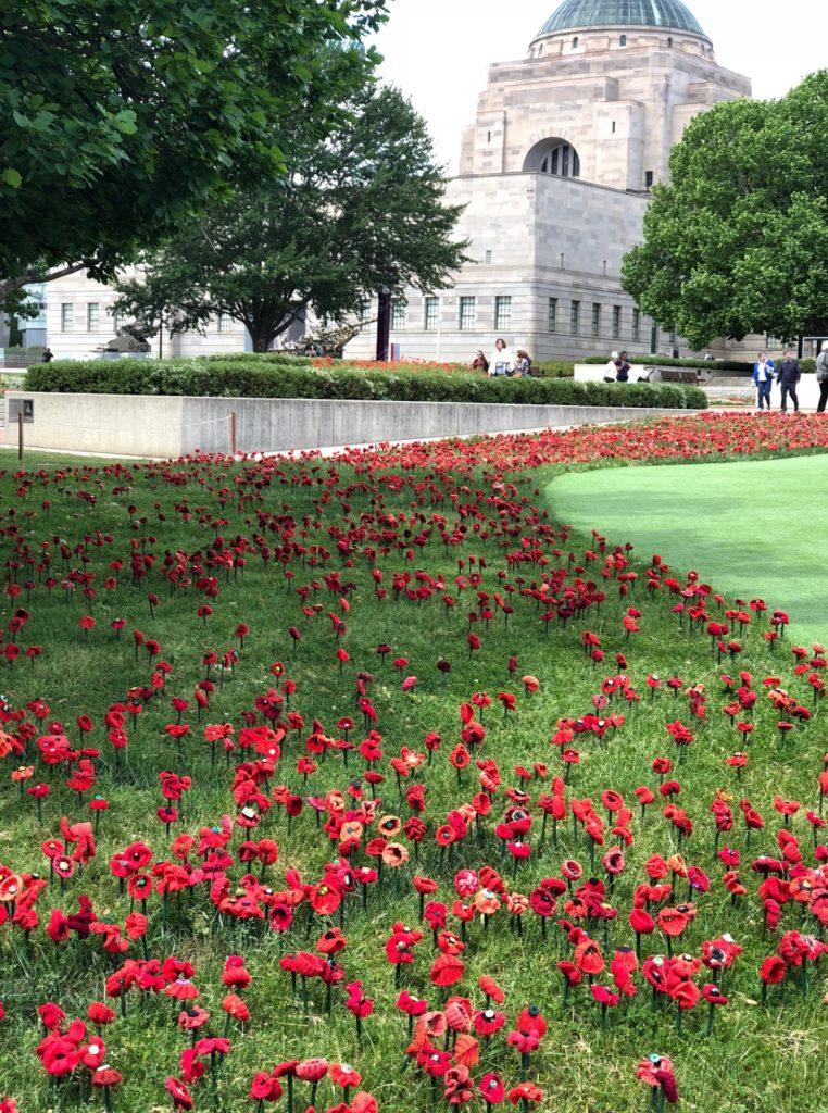 Poppies outside the Australian War Memorial in Canberra.