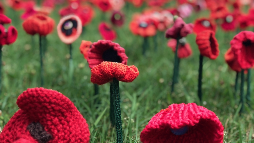 Knitted poppies adorn the surrounds of the Australian War Memorial in Canberra.