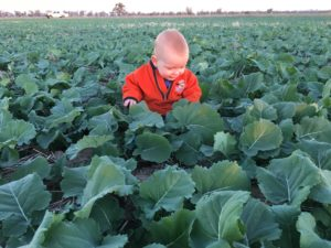 Caleb Amery in Canola crop - Forbes NSW