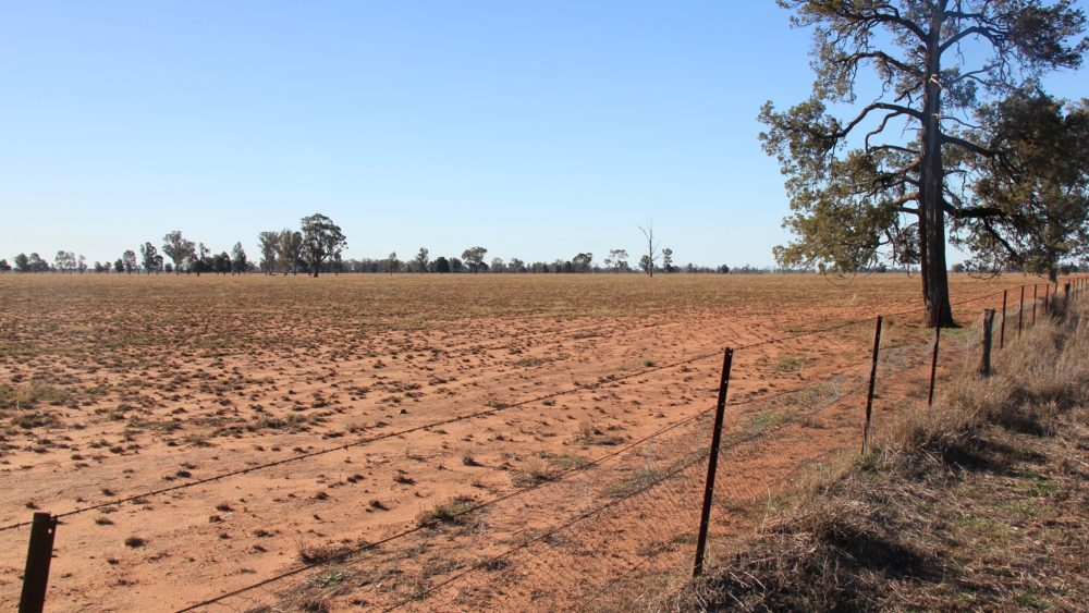 Drought in Narromine, north-west NSW