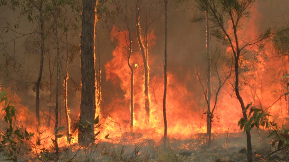 bushfire in Queensland